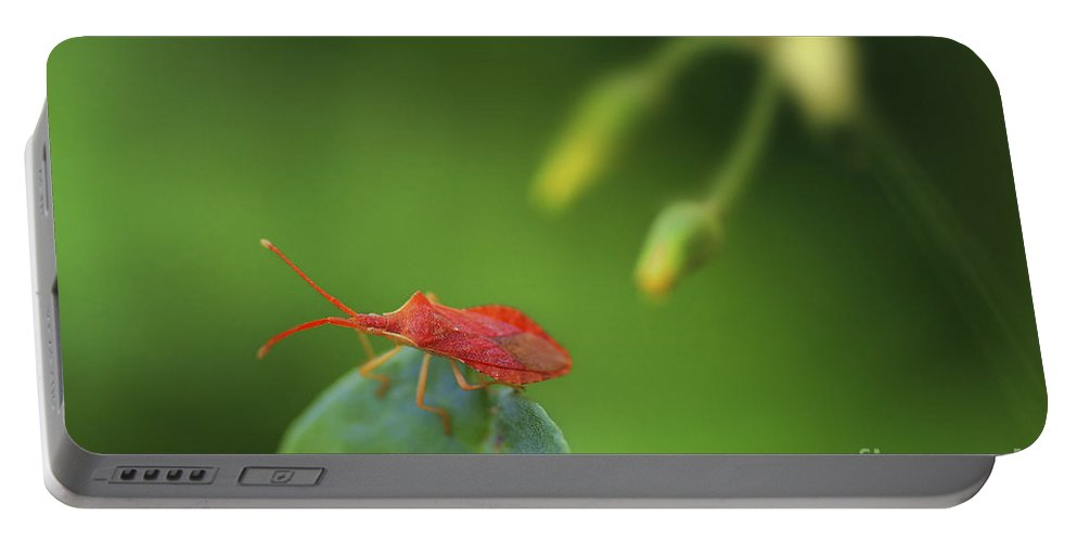 Red Portable Battery Charger featuring the photograph Red Bug On Green by Tal Bedrack