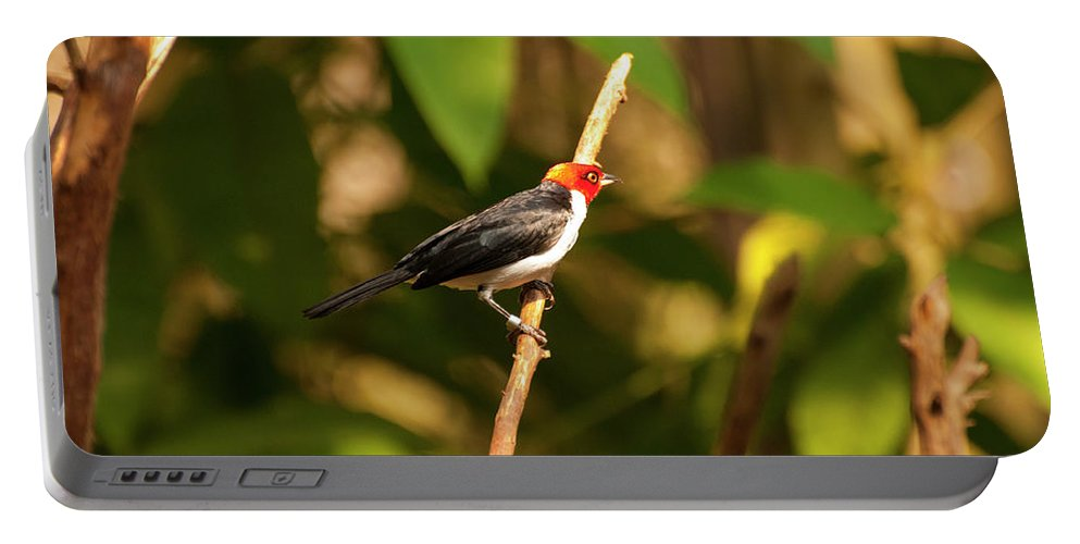Red Capped Cardinal Portable Battery Charger featuring the photograph Red Capped Cardinal by Chris Flees