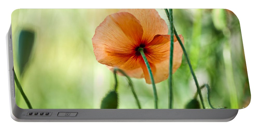 Poppy Portable Battery Charger featuring the photograph Red Corn Poppy Flowers 02 by Nailia Schwarz