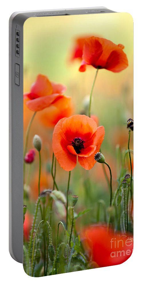 Poppy Portable Battery Charger featuring the photograph Red Corn Poppy Flowers 06 by Nailia Schwarz