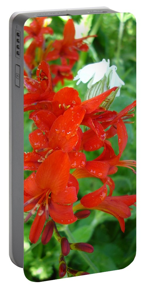 Flora Portable Battery Charger featuring the photograph Red Crocosmia Lucifer by Susan Baker