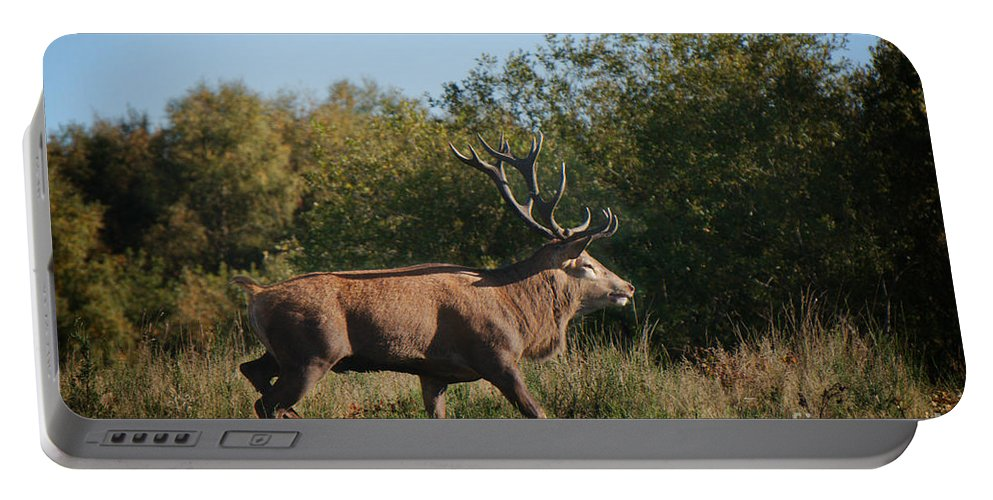 Antlers Portable Battery Charger featuring the photograph Red Deer Stag by Mickey At Rawshutterbug