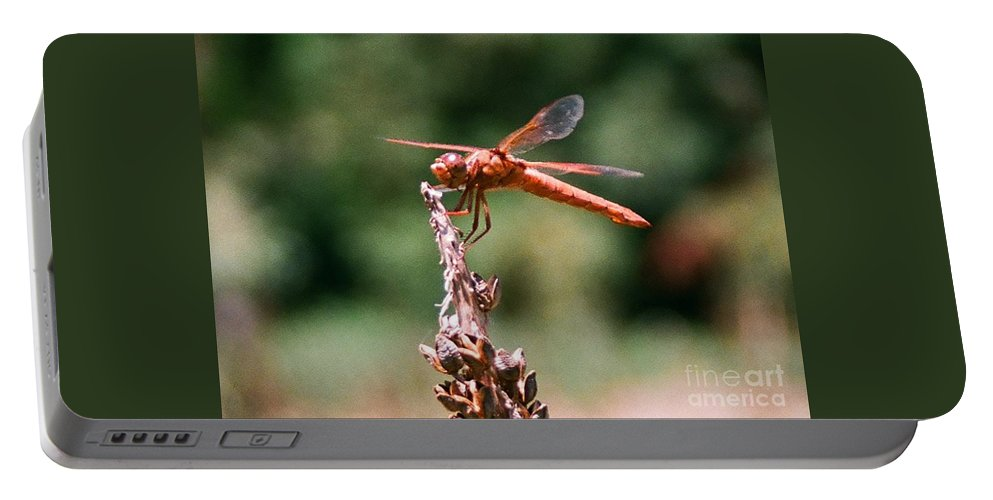 Dragonfly Portable Battery Charger featuring the photograph Red Dragonfly II by Dean Triolo