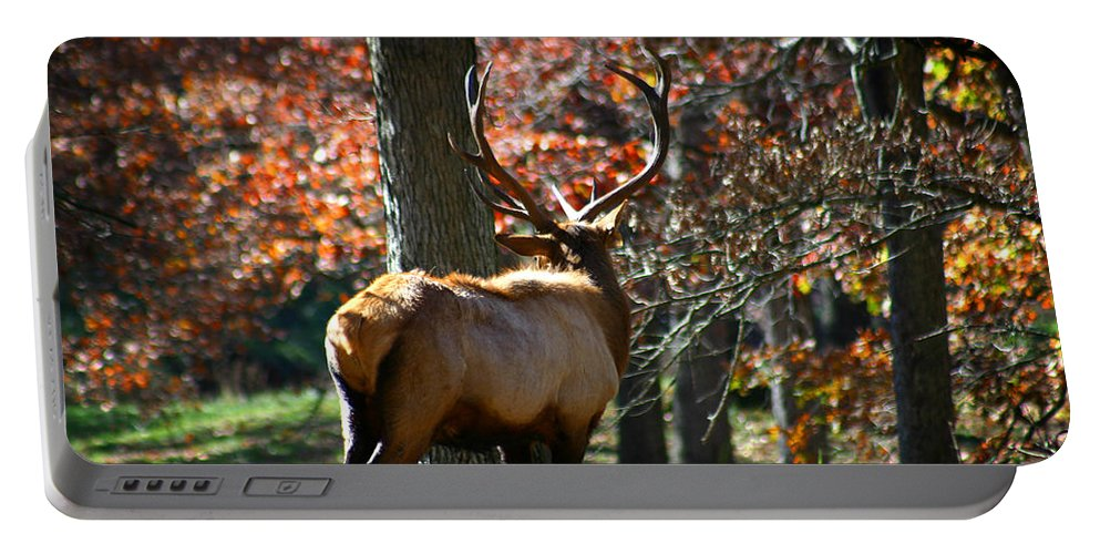 Elk Portable Battery Charger featuring the photograph Red Elk by Anthony Jones
