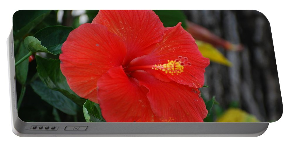 Flowers Portable Battery Charger featuring the photograph Red Flower by Rob Hans