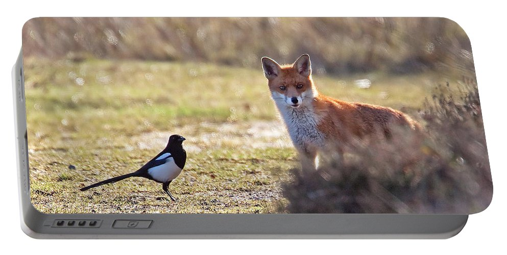 Magpie Portable Battery Charger featuring the photograph Red Fox And Magpie by Bob Kemp