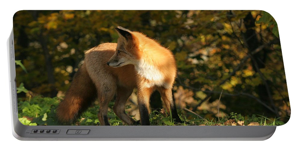 Red Fox Portable Battery Charger featuring the photograph Red Fox In Shadows by Doris Potter