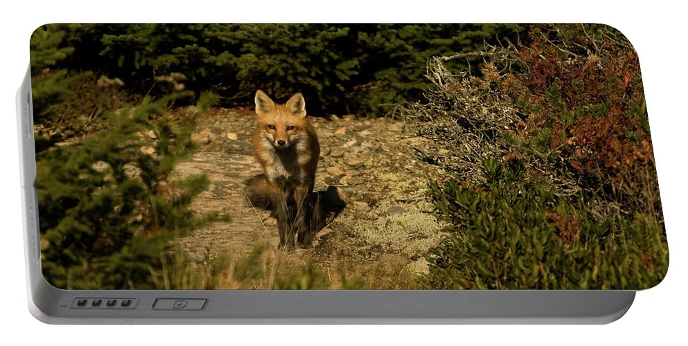 red Fox Portable Battery Charger featuring the photograph Red Fox by Paul Mangold