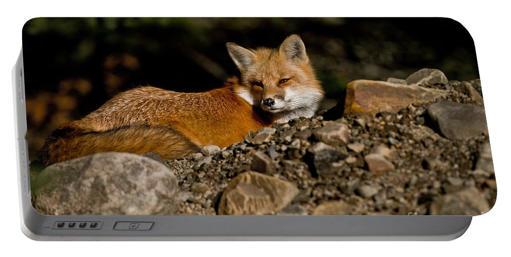 Red Fox Portable Battery Charger featuring the photograph Red Fox Pictures 126 by World Wildlife Photography