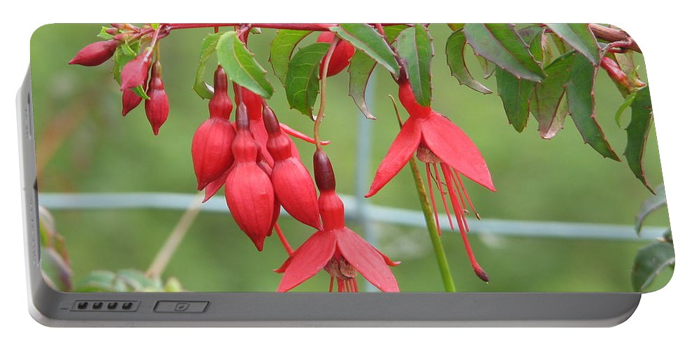 Fresia Portable Battery Charger featuring the photograph Red Fresia by Kelly Mezzapelle
