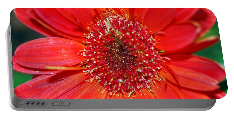 Gerber Portable Battery Charger featuring the photograph Red Gerber Daisy by Amy Fose