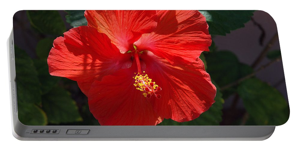 Photography Portable Battery Charger featuring the photograph Red Hibiscus by Susanne Van Hulst