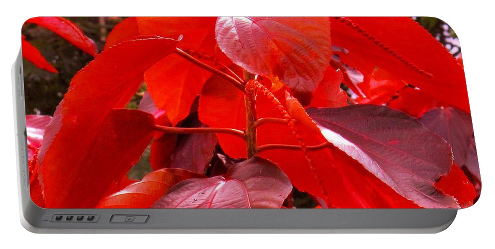 Red Portable Battery Charger featuring the photograph Red by Ian MacDonald