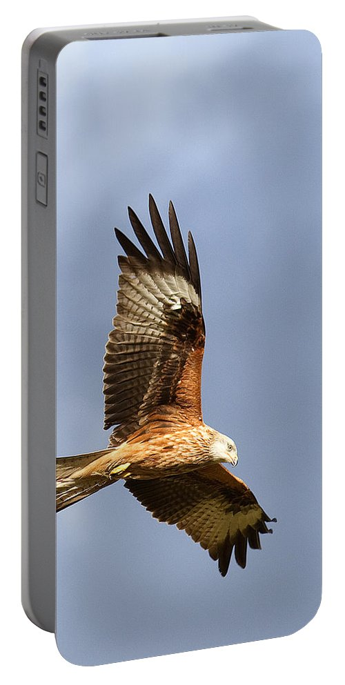 Red Kite Portable Battery Charger featuring the photograph Red Kite Flying by Bob Kemp