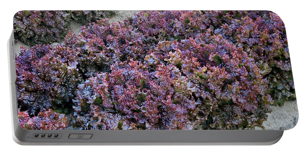 Red Leaf Portable Battery Charger featuring the photograph Red Leaf Lettuce by Inga Spence