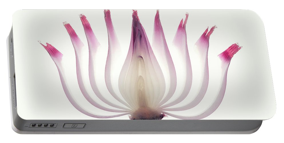 Red Portable Battery Charger featuring the photograph Red Onion Translucent Peeled Layers by Johan Swanepoel