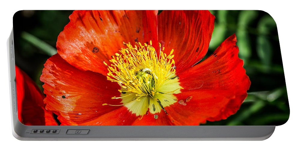 Poppy Portable Battery Charger featuring the photograph Red Poppy by Anthony Evans