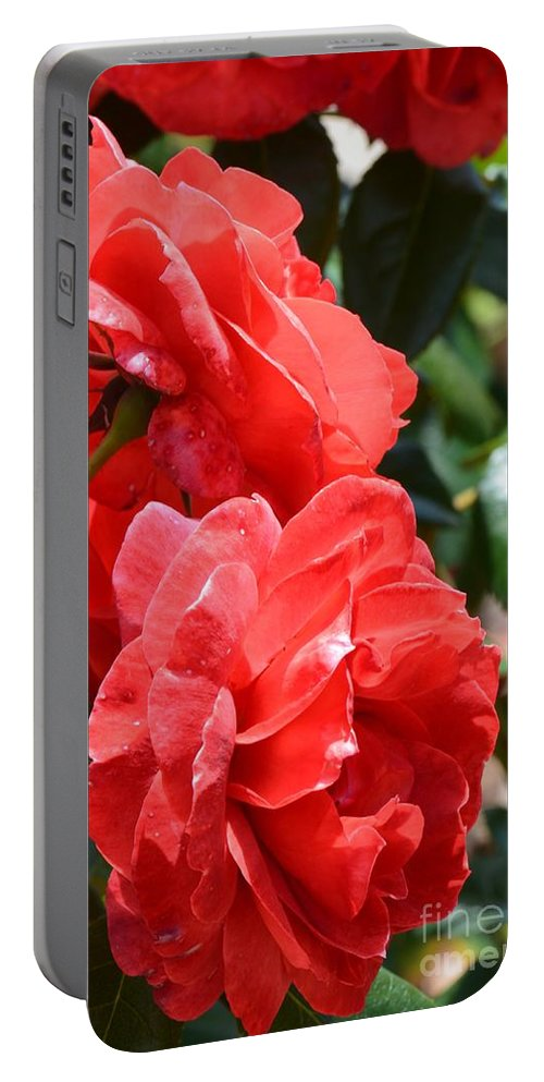 Red Red Roses Portable Battery Charger featuring the photograph Red Red Roses by Maria Urso