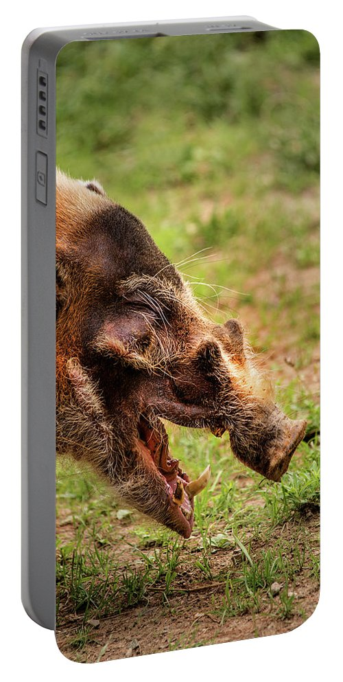 Wildlife Portable Battery Charger featuring the photograph Red River Hog by Don Johnson
