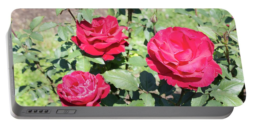 Roses Portable Battery Charger featuring the photograph Red Roses by LaMont Johnson
