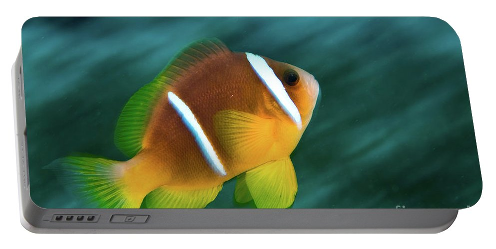 Red Sea Portable Battery Charger featuring the photograph Red Sea Clownfish by Hagai Nativ