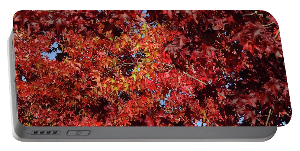 Red Leaves Portable Battery Charger featuring the photograph Red Sea by Donna Blackhall