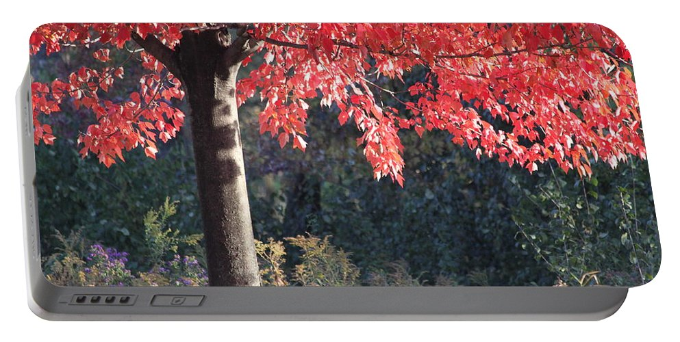 Fall Portable Battery Charger featuring the photograph Red Shade Tree by Lauri Novak