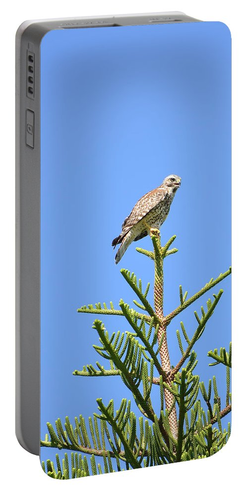 Red-shouldered Perch Portable Battery Charger featuring the photograph Red-shouldered Perch by William Tasker