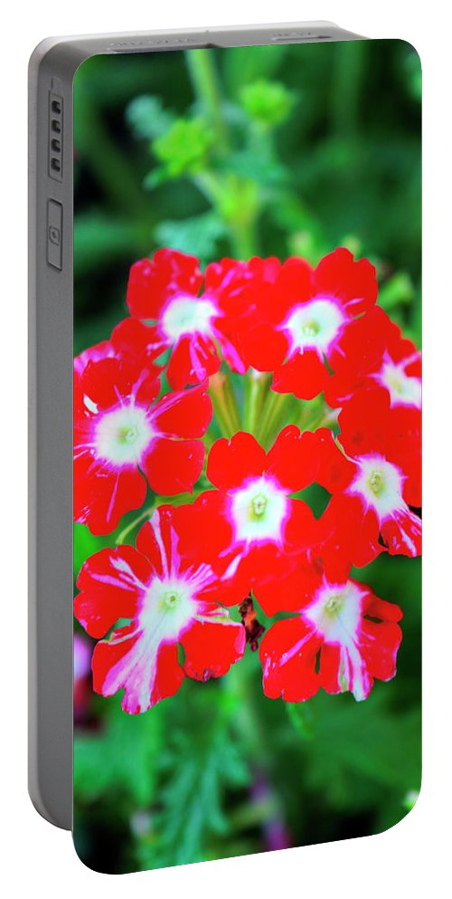 Royal Portable Battery Charger featuring the photograph Red Star Flower by FineArtRoyal Joshua Mimbs