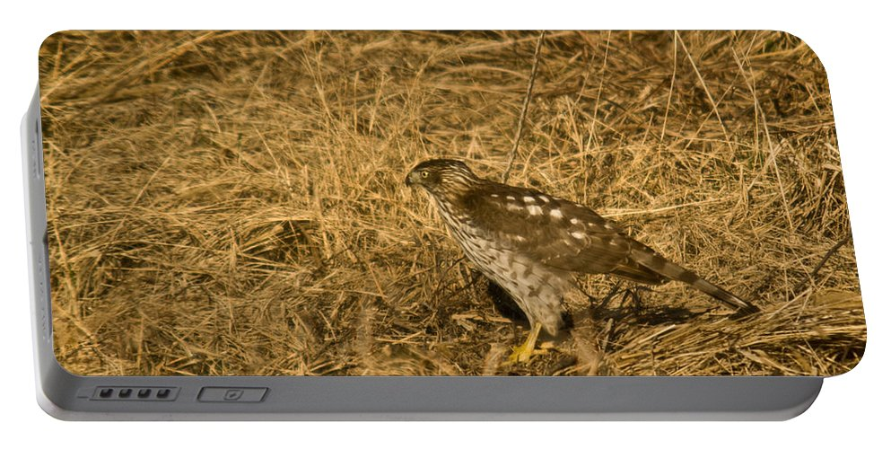 Red Portable Battery Charger featuring the photograph Red Tail Hawk Walking by Douglas Barnett