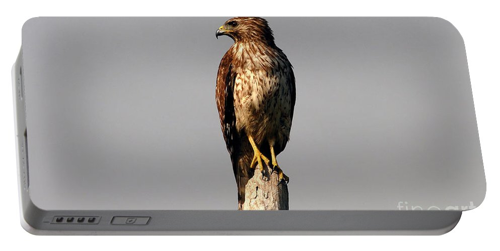 Red Tailed Hawk Portable Battery Charger featuring the photograph Red Tailed Hawk by David Lee Thompson