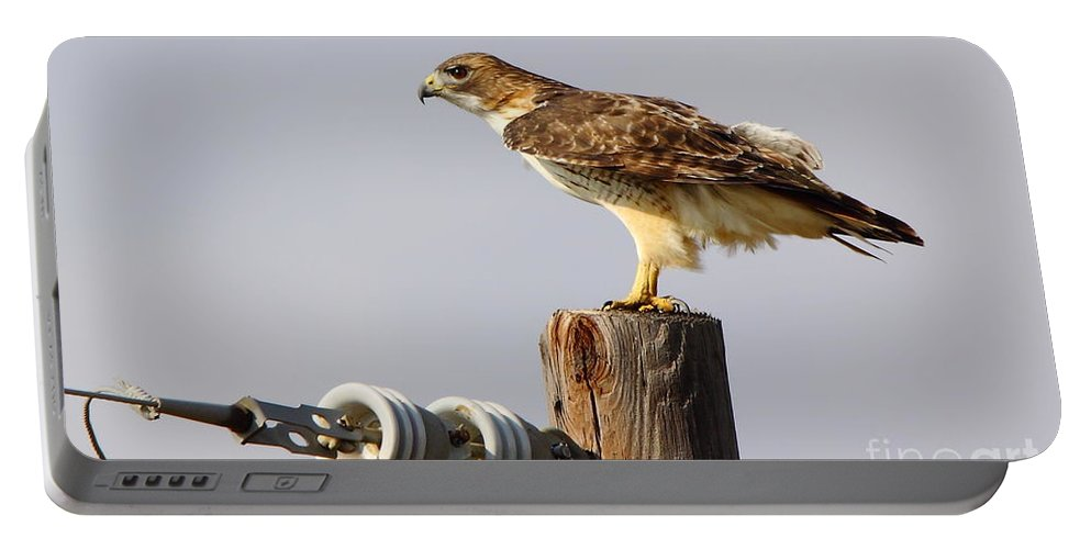 Animal Portable Battery Charger featuring the photograph Red Tailed Hawk Perched by Robert Frederick
