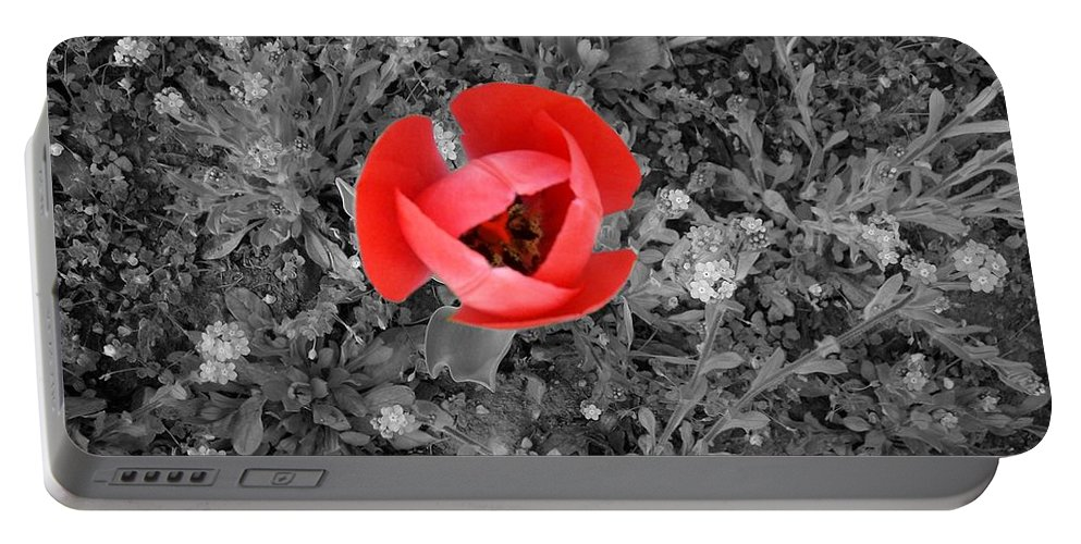 Red Tulip Photography Portable Battery Charger featuring the photograph Red Tulip From Above by Georgeta Blanaru