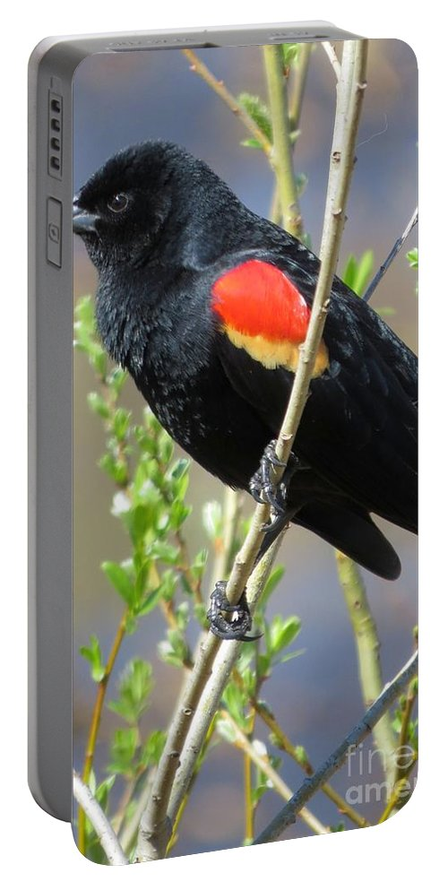 Animal Portable Battery Charger featuring the photograph Red-winged Perch by Frank Townsley