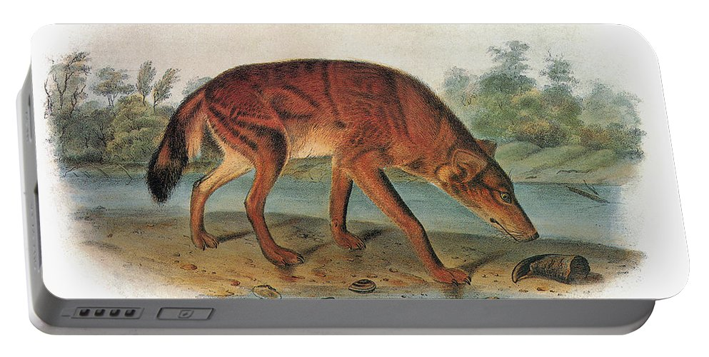 1846 Portable Battery Charger featuring the photograph Red Wolf (canis Lupus) by Granger