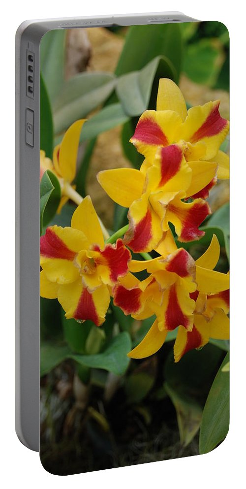Macro Portable Battery Charger featuring the photograph Red Yellow Orchids by Rob Hans