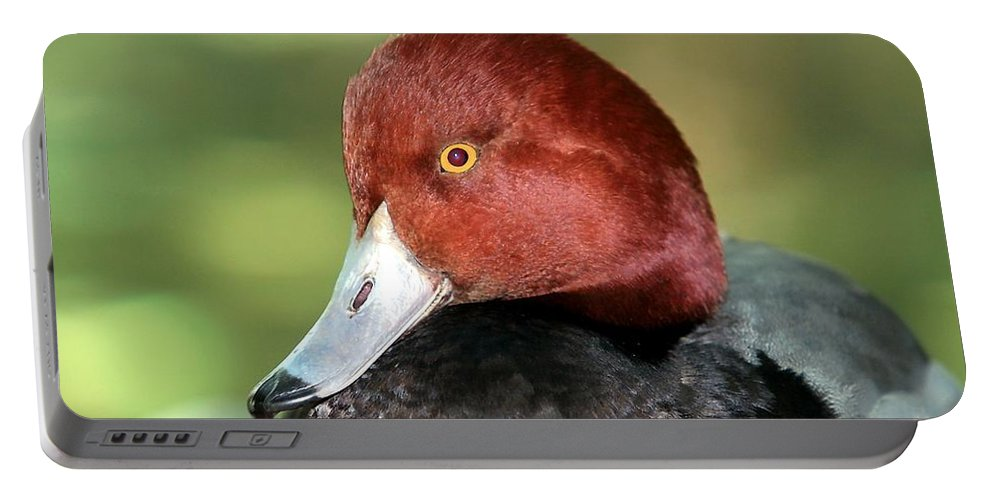 Duck Portable Battery Charger featuring the photograph Redhead Duck by Randy Matthews