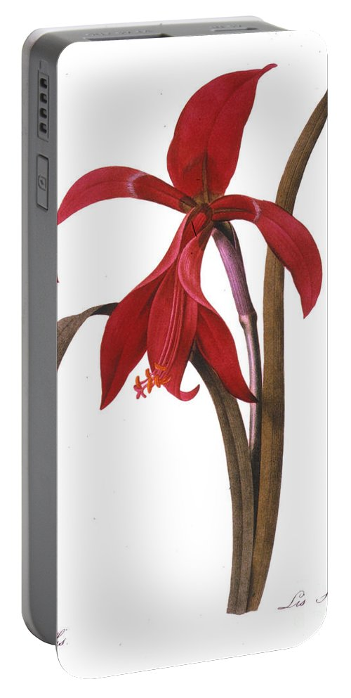 1833 Portable Battery Charger featuring the photograph Redout�: St. James Lily by Granger