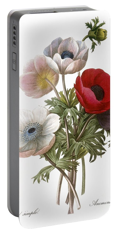 1833 Portable Battery Charger featuring the photograph Redoute: Anemone, 1833 by Granger