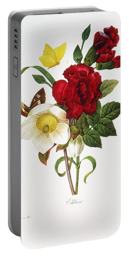 1833 Portable Battery Charger featuring the photograph Redoute: Hellebore, 1833 by Granger
