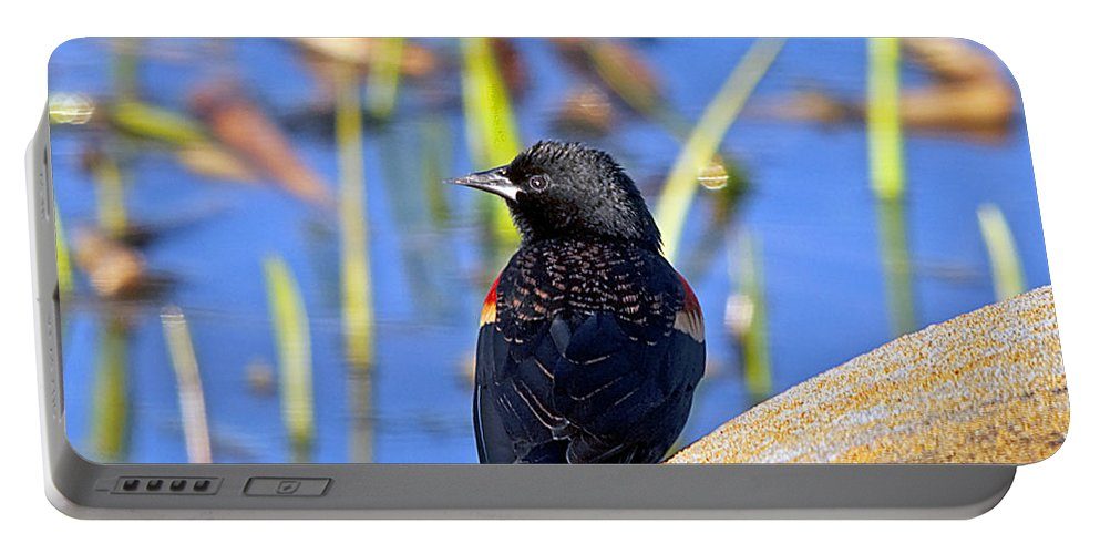 Wildlife Portable Battery Charger featuring the photograph Redwinged Blackbird by Kenneth Albin