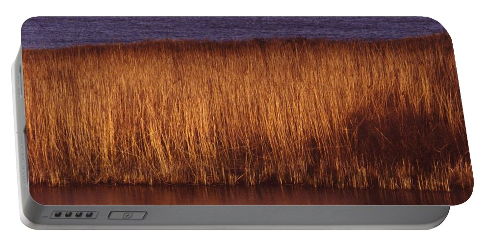 Nature Portable Battery Charger featuring the photograph Reeds by Paul Borden
