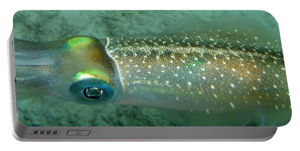 Underwater Portable Battery Charger featuring the photograph Reef Squid by Kimberly Mohlenhoff