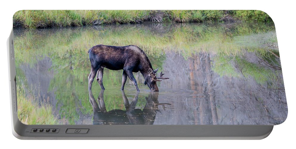 Moose Portable Battery Charger featuring the photograph Reflecting by David F Hunter