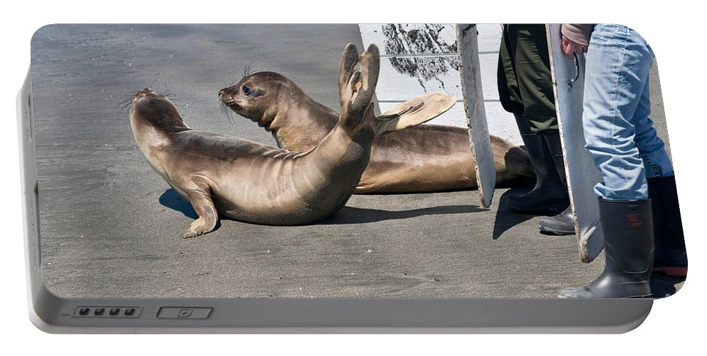 Animal Portable Battery Charger featuring the photograph Releasing Elephant Seals by Inga Spence