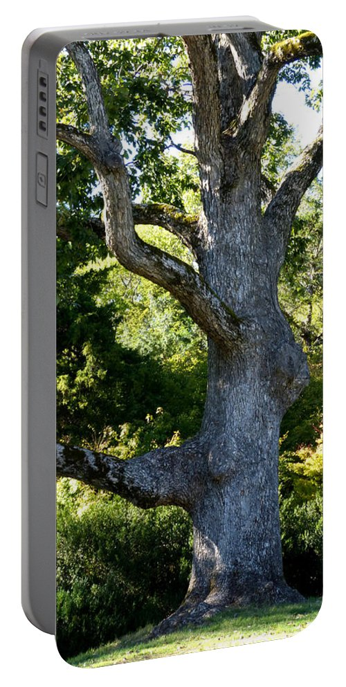 Tree Portable Battery Charger featuring the photograph Reliable by Theresa Asher