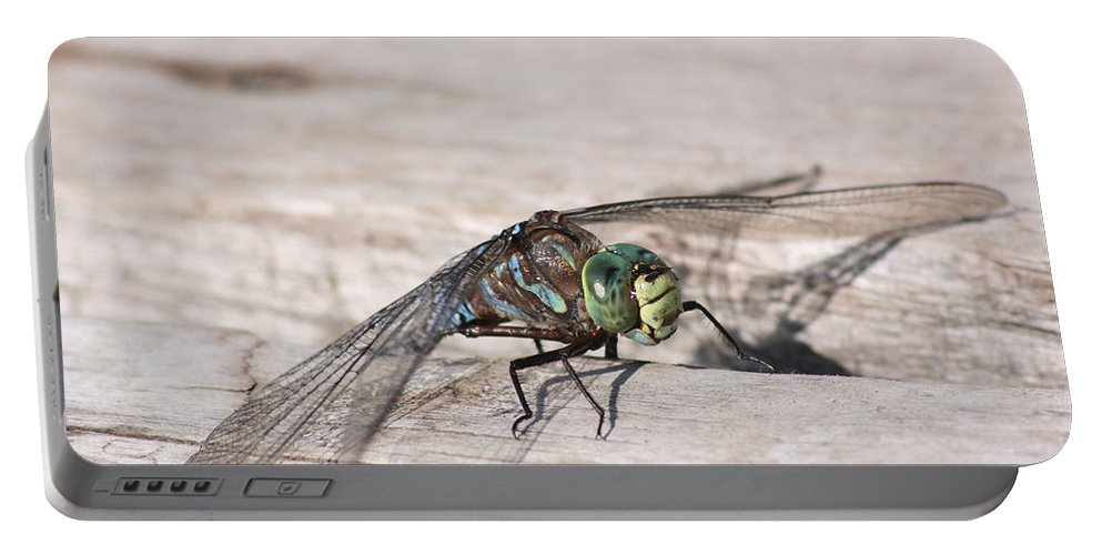 Dragonfly Nature Bug Flying Insect Wings Eyes Colorful Creature Portable Battery Charger featuring the photograph Rescued Dragonfly by Andrea Lawrence