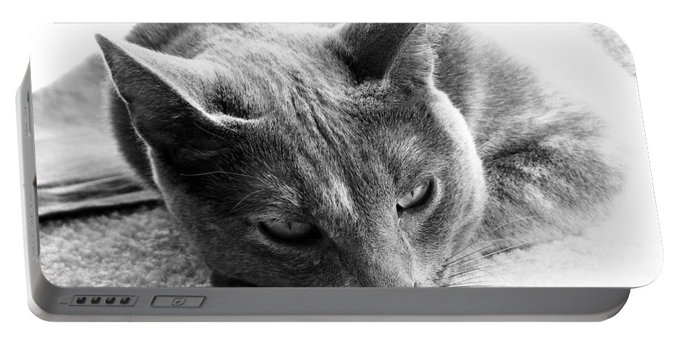 Cats Portable Battery Charger featuring the photograph Resting by Amanda Barcon