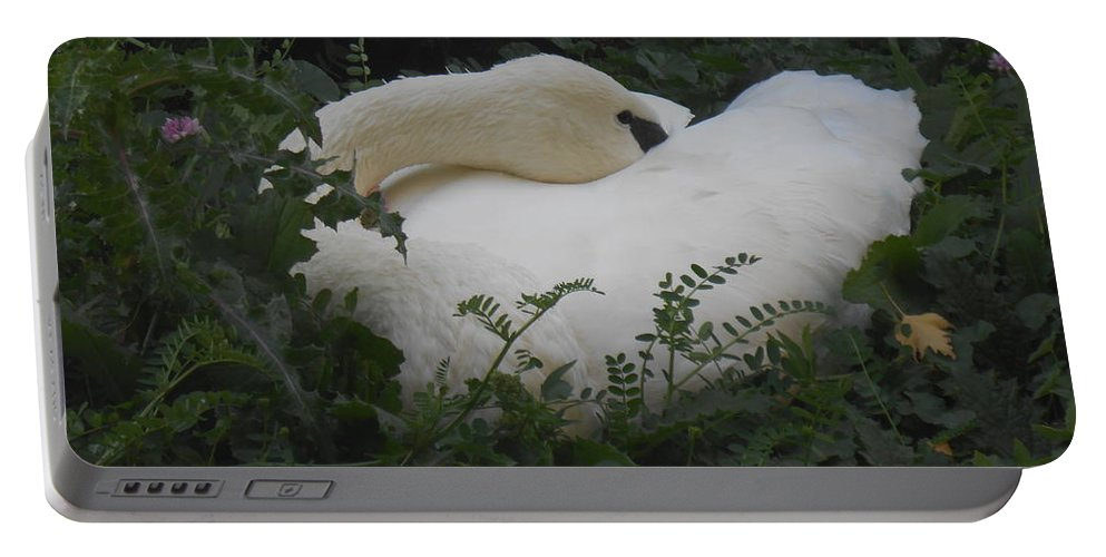 Trumpeter Swan Portable Battery Charger featuring the photograph Resting Swan by LKB Art and Photography