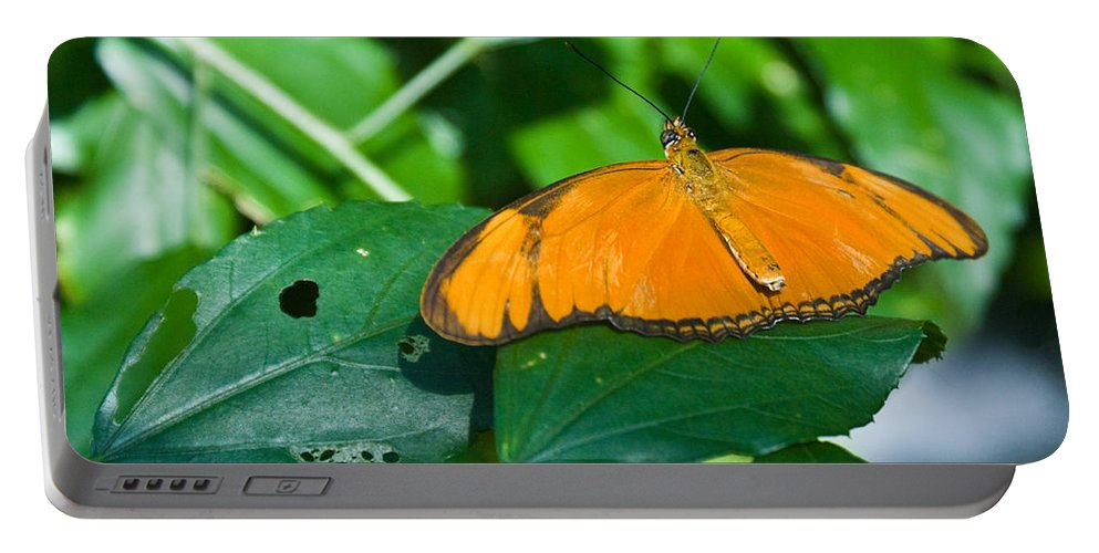 Butterfly Portable Battery Charger featuring the photograph Resting--tropical Butterfly by Douglas Barnett